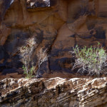 Tamarisk & Stained Rockface